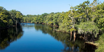 Suwannee River in Florida